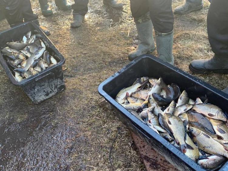 У місцеве озеро запустили риби на 20 тисяч гривень