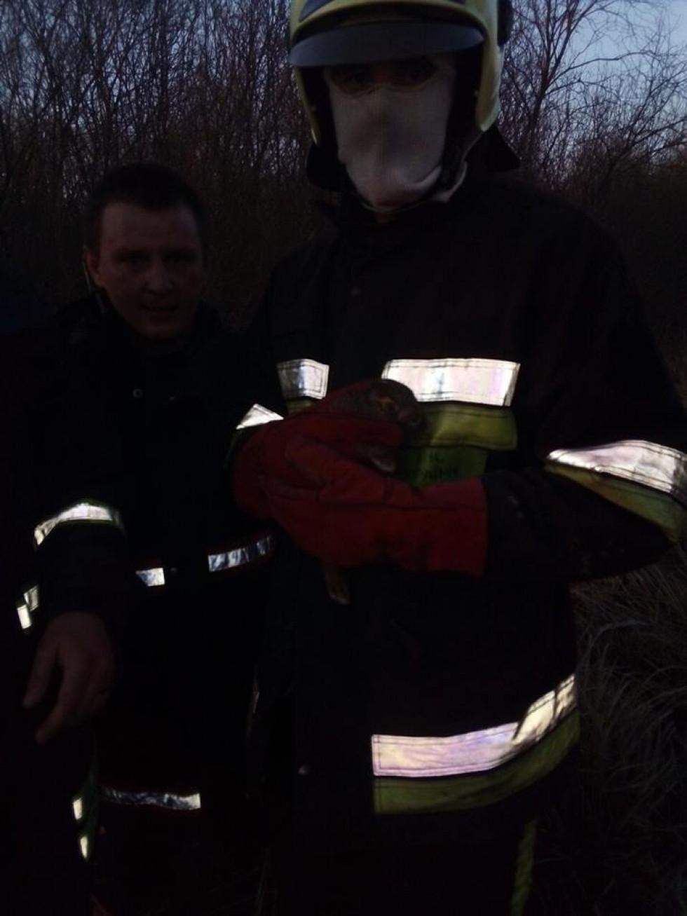 Вогнеборці врятували зайченя