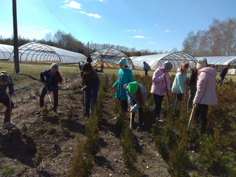 Школярі просапують дерева