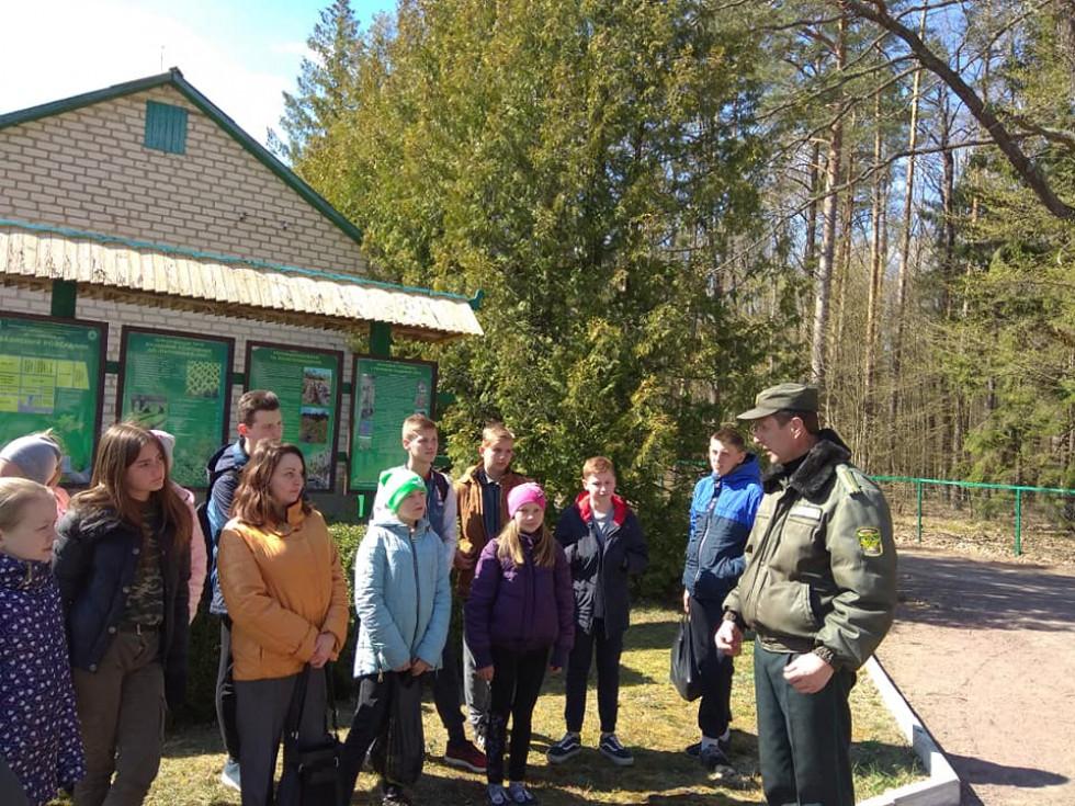 Лісівник розповідає дітям про різновиди дерев
