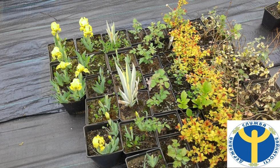 Саджанці квітів та кущів