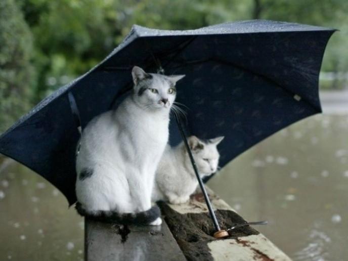 У Ратному дощитиме