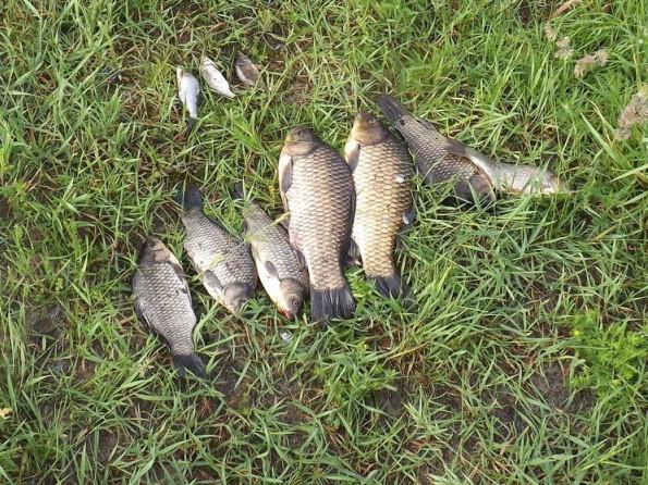 На Ратнівщині затримали рибних браконьєрів
