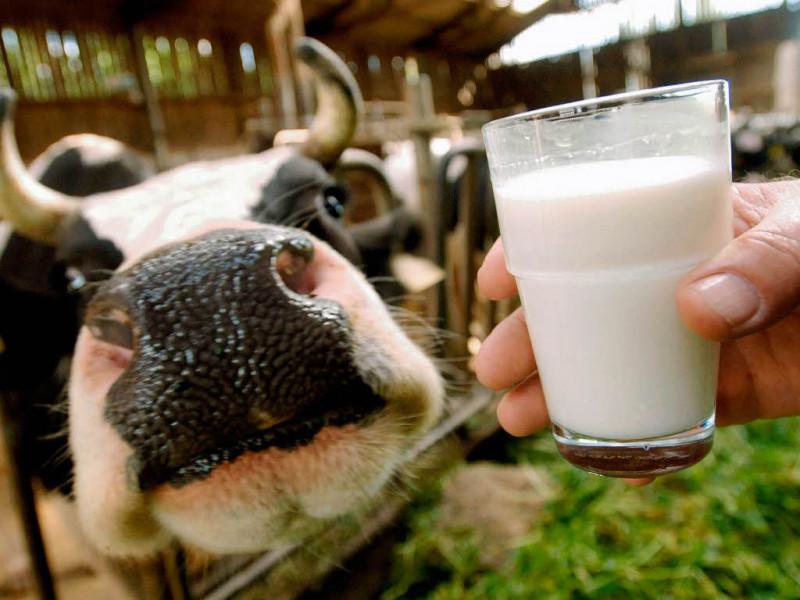 Молоко в Україні вироблятимуть за новими стандартами