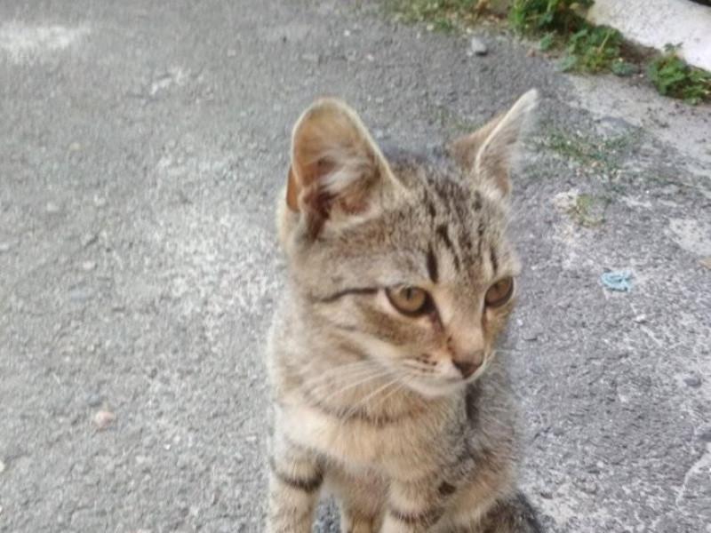 Бездомні котики шукають господарів