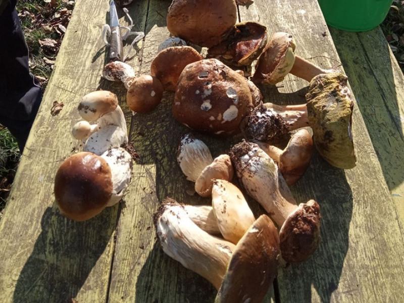 Священник із Мельник-Річицьких вполював «чималих» грибів