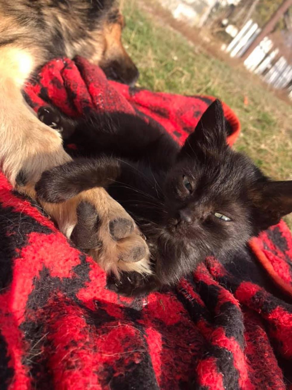 Поранений собака та кіт