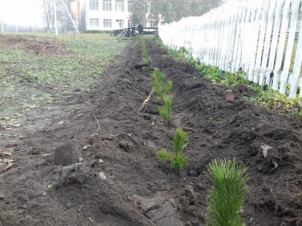 Посаджені дерева