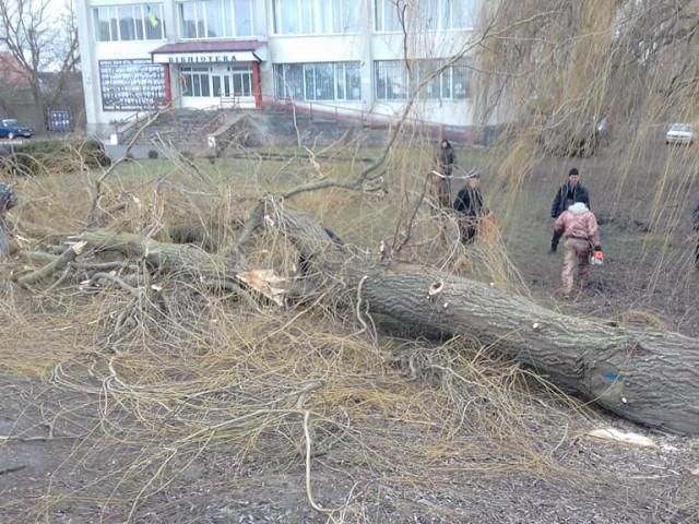 У Ратному комунальники зрізали аварійні дерева