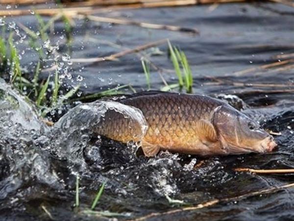 Риба / Фото ілюстративне