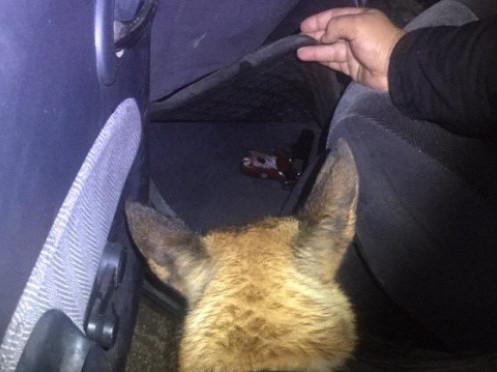 У «Домановому» пес винюхав пістолет та набої