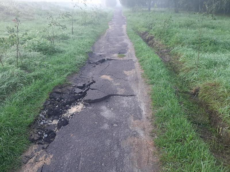 Пошкоджена пішохідна доріжка та насадження
