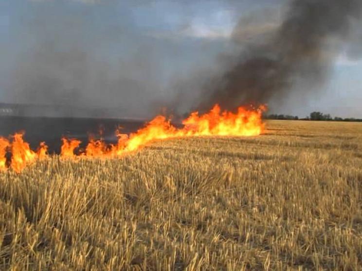 """Результат пошуку зображень за запитом """"спалювання трави"""""""