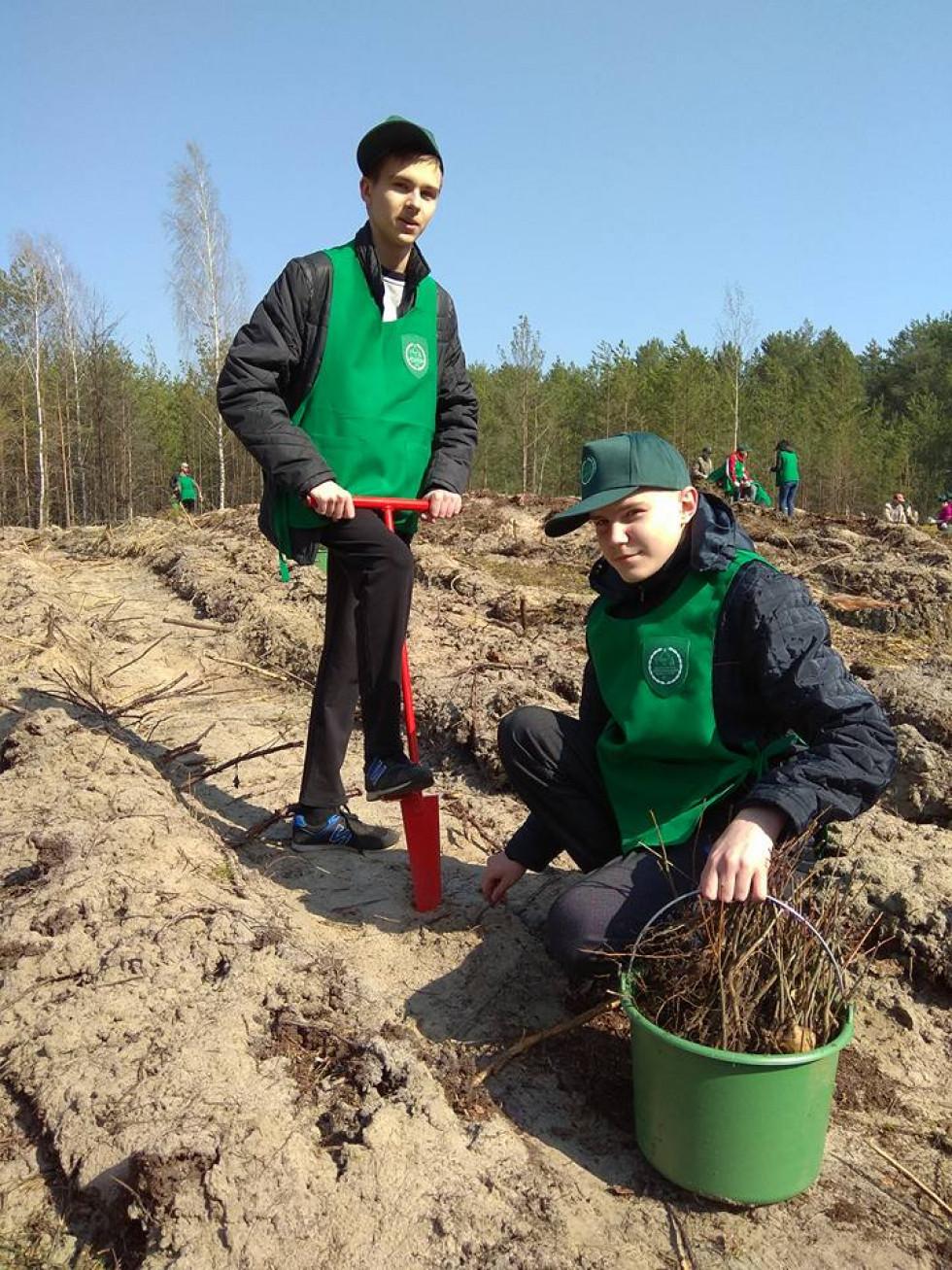 Під час посадки лісу