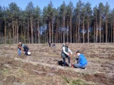 Школярі висаджують ліс