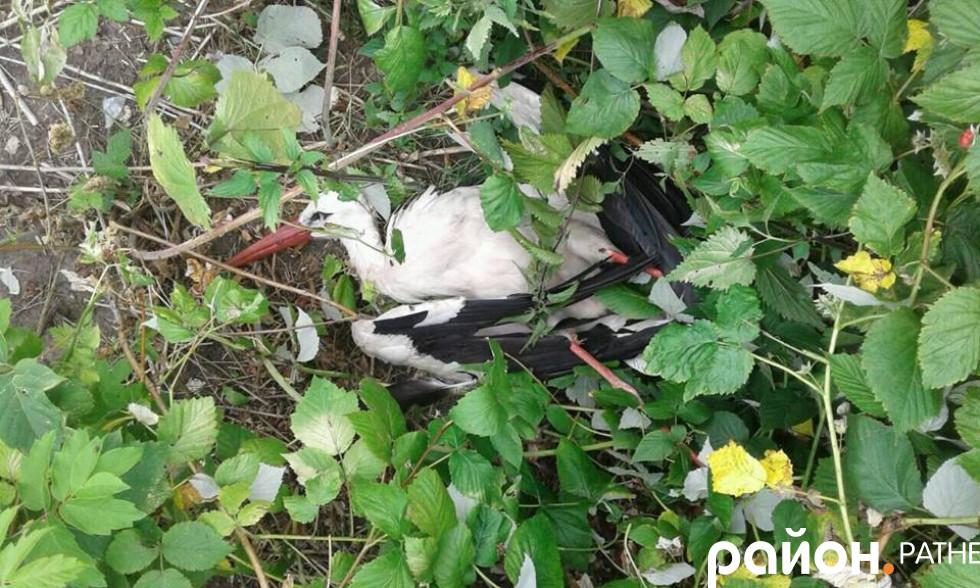 Загиблий птах