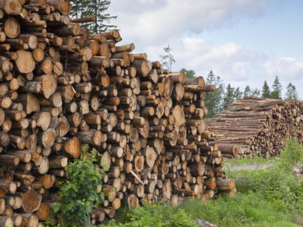 Лісовим контрабандистам посилили покарання