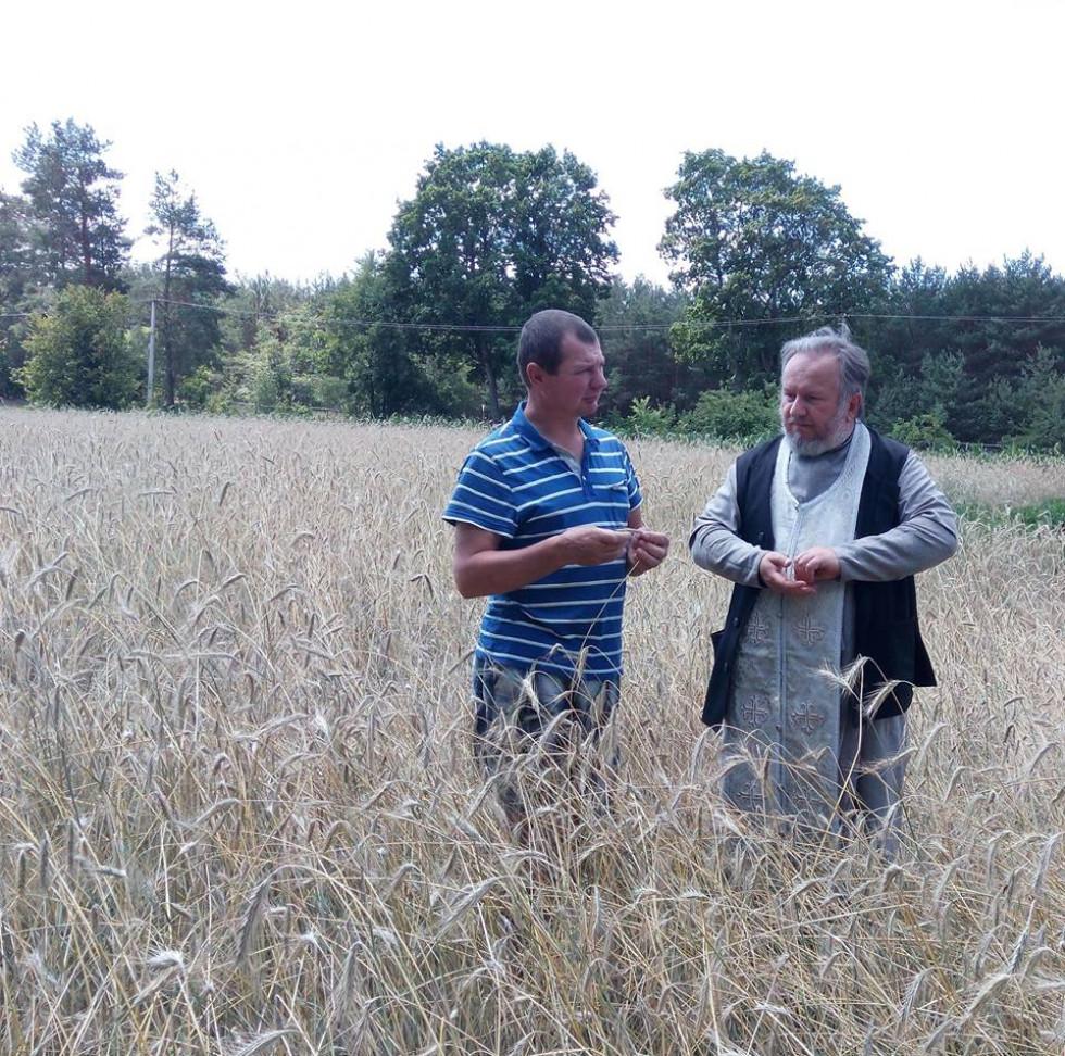 Огляд стану зернових полів