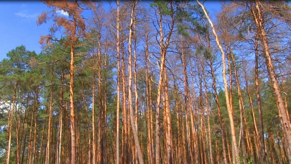 Уражені дерева