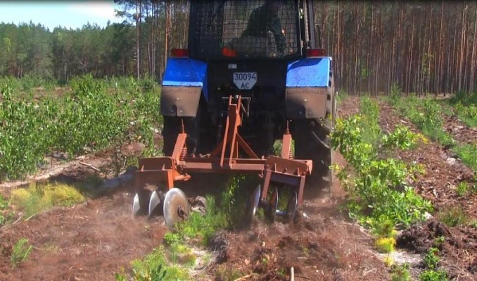 Обробка лісових угідь культиватором