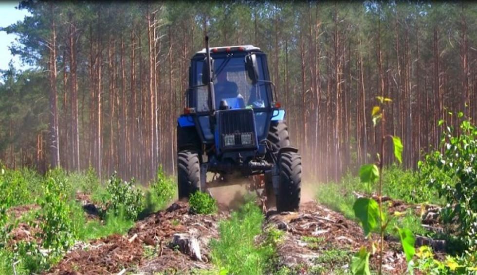 Обробка лісвої ділянки культиватором