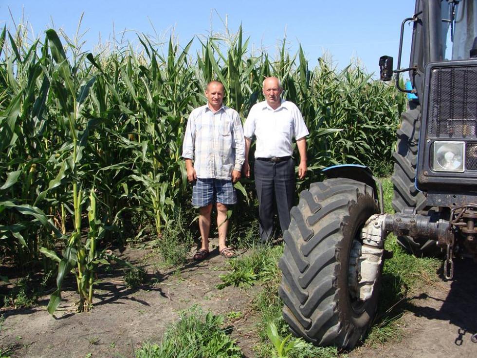 Біля врожаю кукурудзи