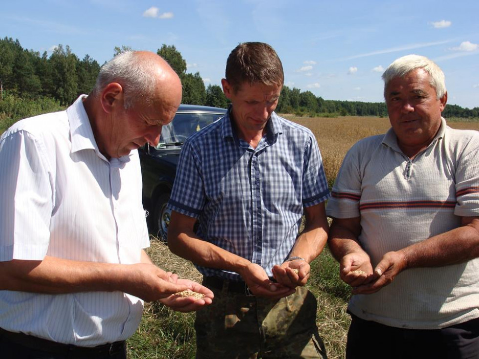 Перевірка зернових