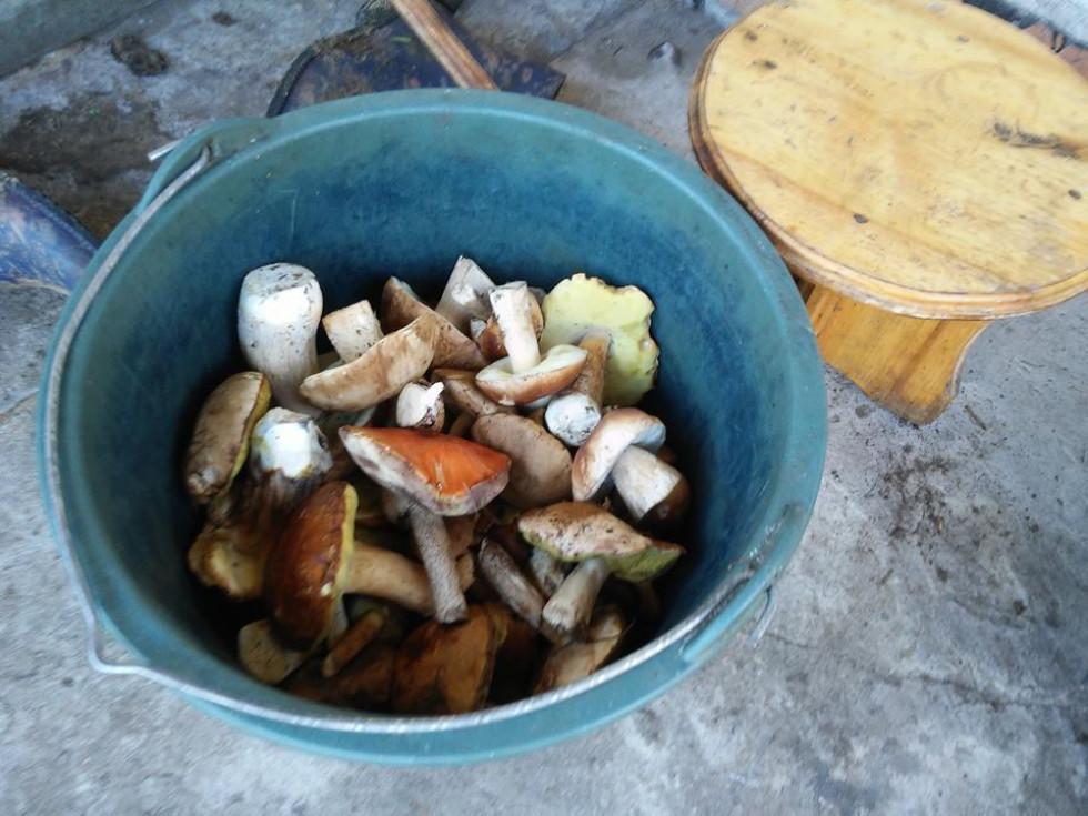 Зібрані гриби