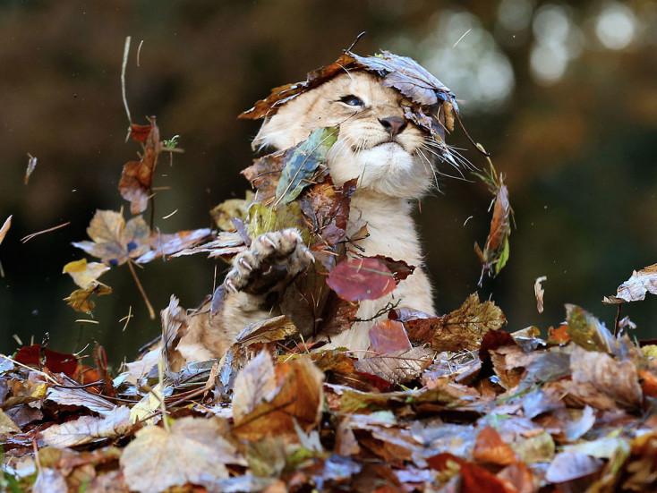 У понеділок, 1 жовтня, ратнівчанам синоптики не передбачають опадів