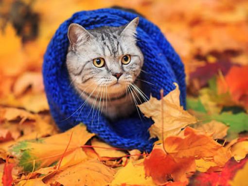 7 жовтня у Ратному буде похмурим та прохолодним