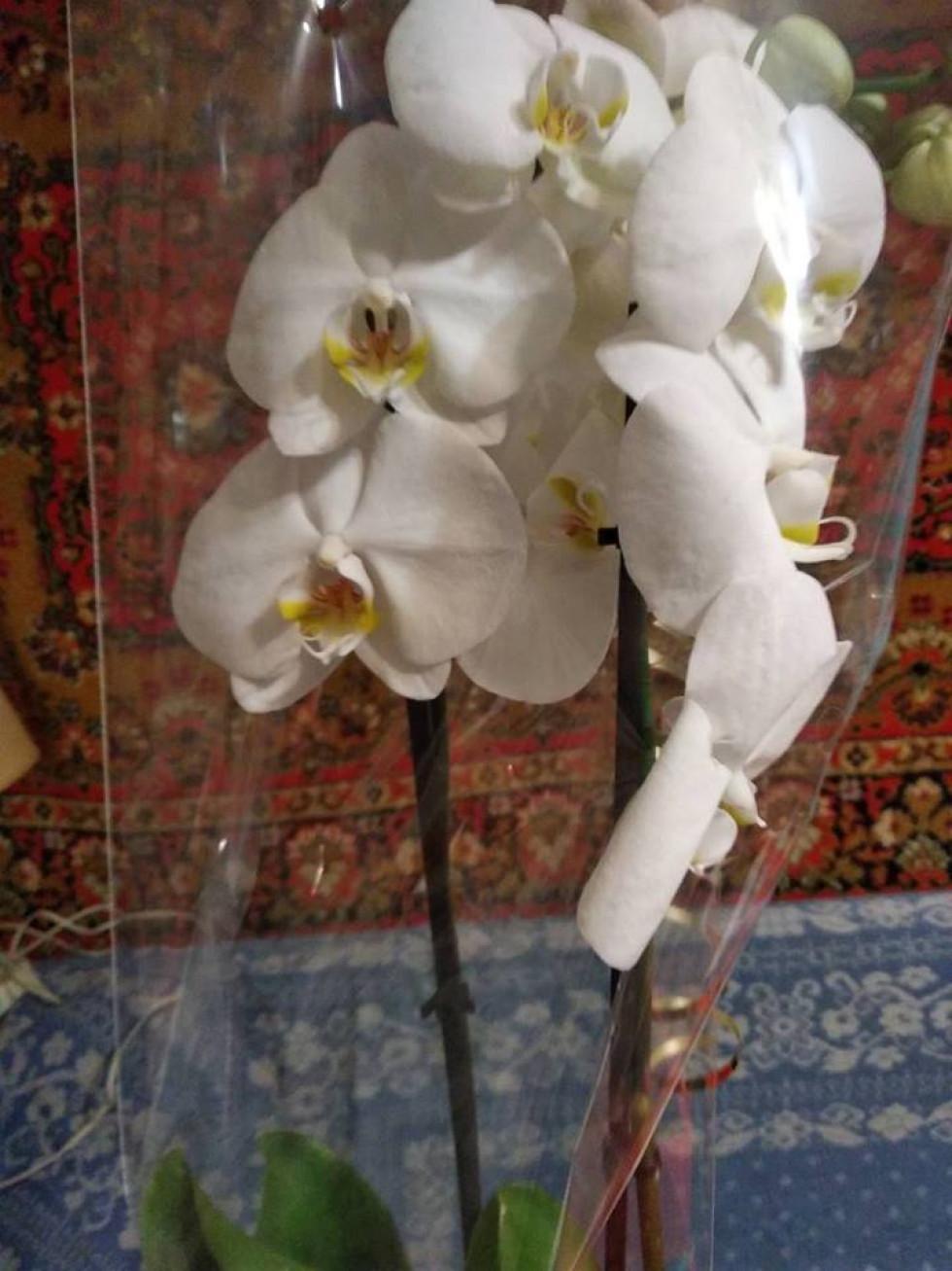 Подарована орхідея
