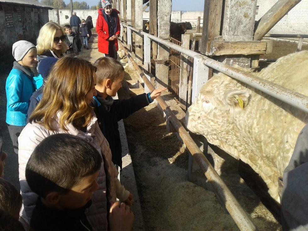 Учасники екскурсії оглядають велику рогату худобу