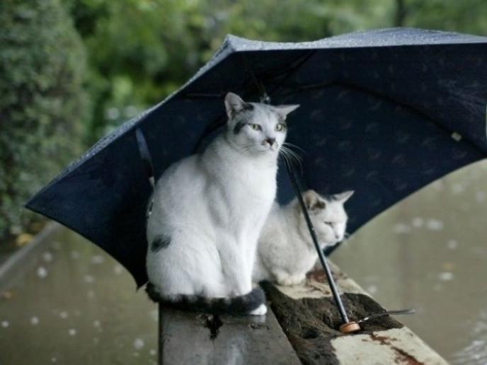 У Ратному буде дощовито