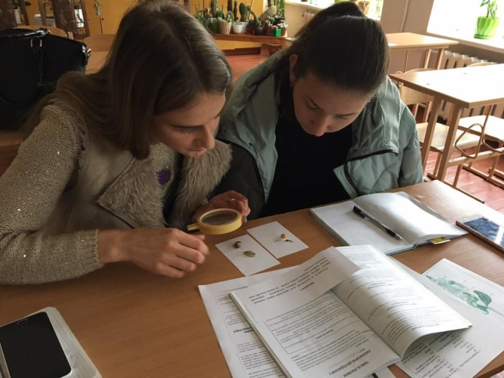 Школярі досліджують насіння