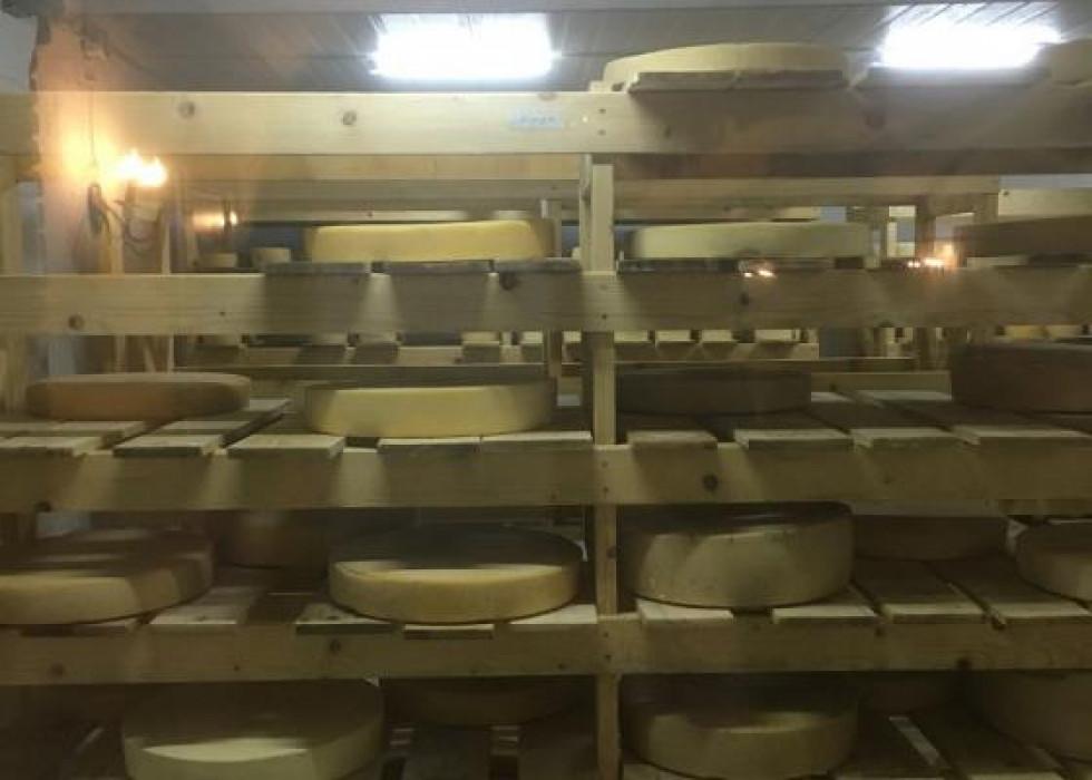 Різноманіття сирної продукції