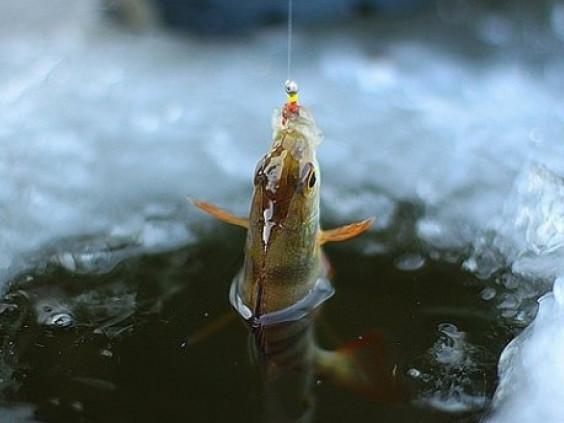 На Ратнівщині заборонили вилов риби на зимувальних ямах дев'ятьох озер району