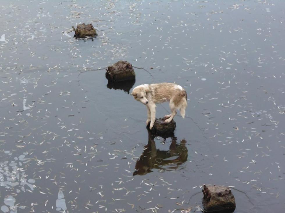 Пес чекає на своїх рятівників
