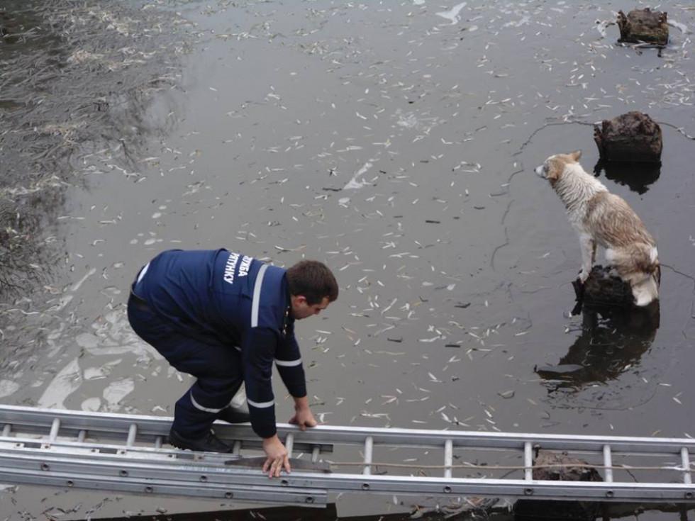 Рятувальники визволяють пса