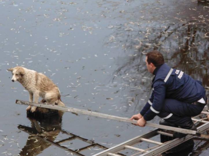 У Ратному із крижаного полону врятували собаку