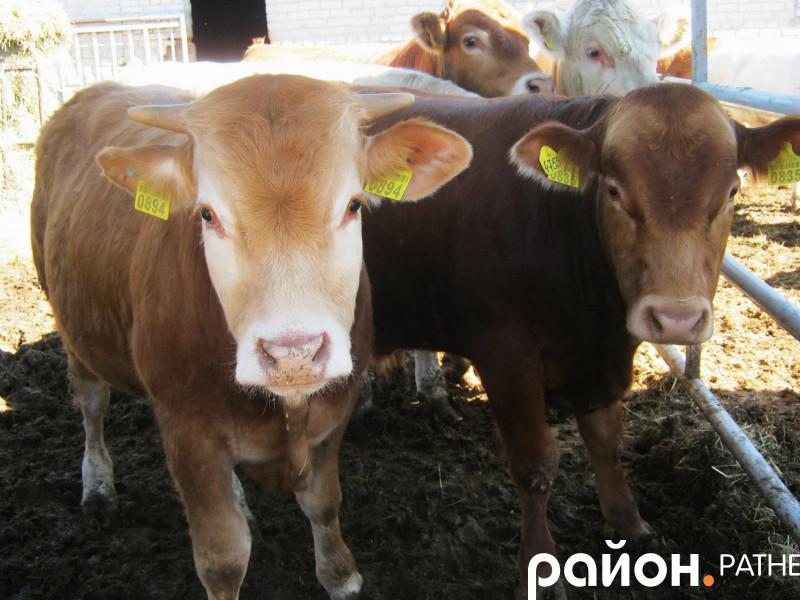 Мешканці ферми «Ратнівський аграрій»
